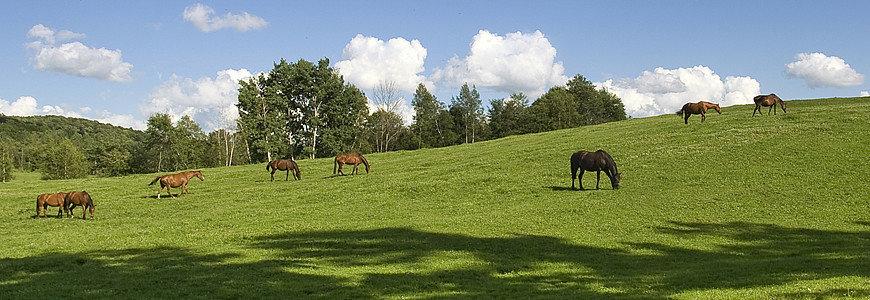 horses-feeding