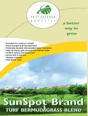 SunSpot -Turf Grass Seeds