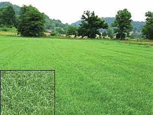 Turf Grass Seed Company